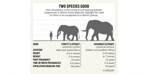 elephants-chart