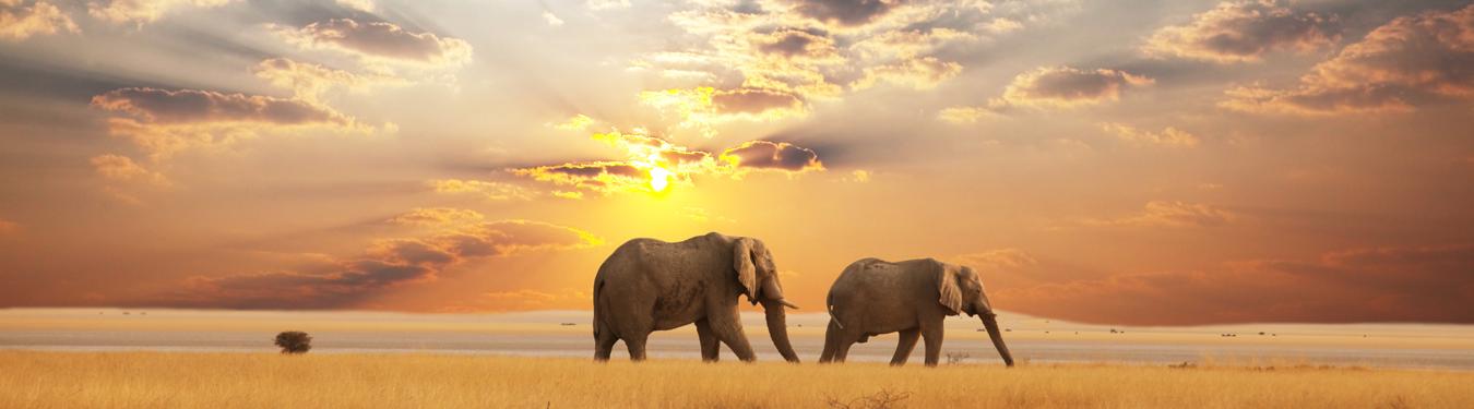 Elephant Death Beseach Slider