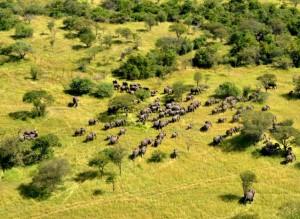 ELEPHANT HEARD FROM THE AIR