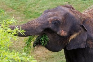 Chai at the Oklahoma City Zoo & Botanical Garden in August, 2015.