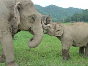 ELEPHANTS - BABY AND MOM