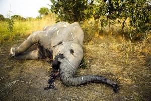 ELEPHANTS - 87 KILLED